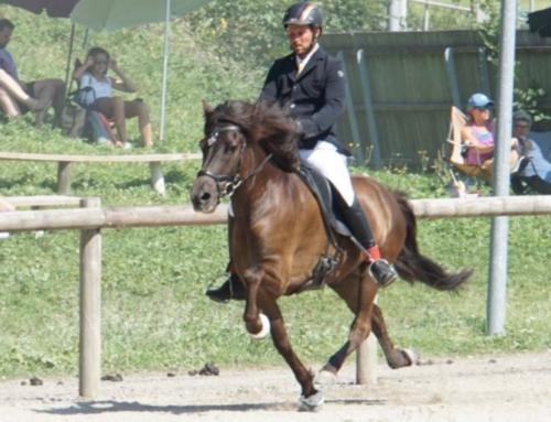 6.-9. August: Schweizermeisterschaft Reithof Neckertal